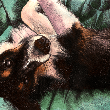 sheltie eskimo, sheltie, dog, dogs, puppy, puppies, pet, pets, cute, watercolor, watercolors, watercolour, watercolours, painting, paintings, paint, ink, inks, pen, ballpoint pen, mixed media, drawing, drawings, animal, animals, nature, realism, realistic, noellembrooks, noelle m brooks, noelle brooks, art, illustration, illustrations, portrait, portraits, portraiture