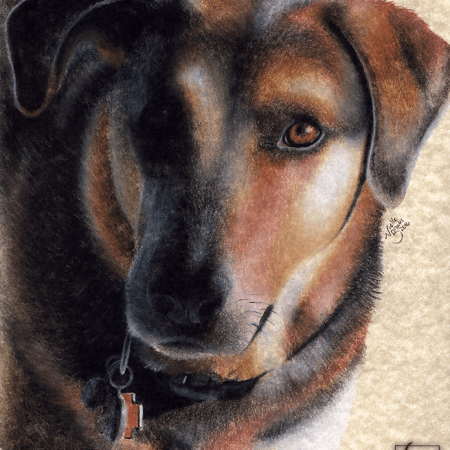 dog, dogs, puppy, puppies, face, close-up, close up, short haired, short-haired, charcoal, charcoals, charcoal pencil, charcoal pencils, realism, realistic, gradient, animal, animals, pet, pets, cute, achromatic, black and white, black, white, grey, gray, cream, creme, beige, noelle, noelle brooks, noellebrooks, noelle m brooks, noellembrooks, art, series, drawing, drawings, illustration, illustrations, portrait, portraits, picture, pictures,