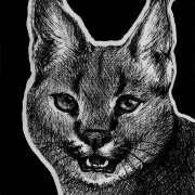 caracal, caracals, big cat, big cats, kitty, cat, cats, ink, inks, pen, pens, ballpoint pen, ballpoint pens, realism, realistic, animal, animals, wildlife, nature, achromatic, black and white, black, white, grey, gray, noelle, noelle brooks, noellebrooks, noelle m brooks, noellembrooks, series, drawings, pictures, portrait, portraits