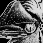 chambered nautilus, nautilus, close-up, close up, face, ink, inks, pen, pens, ballpoint pen, ballpoint pens, realism, realistic, animal, animals, wildlife, nature, achromatic, black and white, black, white, grey, gray, noelle, noelle brooks, noellebrooks, noelle m brooks, noellembrooks, art, series, drawing, drawings, picture, pictures, illustration, illustrations, portrait, portraitssm ink inks ballpoint pen draw drawing drawings image images picture pictures art arts artsy artwork artworks artist artistic project projects series create creates creative black and white achromatic monochromatic monochrome animal animals kingdom animalia wildlife nature art artist trading card cards white-out white out whiteout witeout wite-out wite portrait portraits portraiture profile profiles realism realistic detail details detailed dark high contrast shadows shadow shadowed art