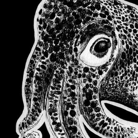 common bobtail squid, bobtail squid, squid, squids, cute, side, profile, face, close-up, close up, ink, inks, pen, pens, ballpoint pen, ballpoint pens, realism, realistic, animal, animals, wildlife, nature, achromatic, black and white, black, white, grey, gray, noelle, noelle brooks, noellebrooks, noelle m brooks, noellembrooks, art, series, drawing, drawings, picture, pictures, illustration, illustrations, portrait, portraits