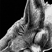 leucism ink inks ballpoint pen draw drawing drawings image images picture pictures art arts artsy artwork artworks artist artistic project projects series create creates creative black and white achromatic monochromatic monochrome animal animals kingdom animalia wildlife nature art artist trading card cards white-out white out whiteout witeout wite-out wite portrait portraits portraiture profile profiles realism realistic detail details detailed dark high contrast shadows shadow shadowed art fennec fox foxes canine canines