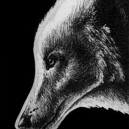 arctic wolf, wolf, wolves, gray wolf, gray wolves, profile, side, face, close-up, close up, ink, inks, pen, pens, ballpoint pen, ballpoint pens, realism, realistic, animal, animals, wildlife, nature, achromatic, black and white, black, white, grey, gray, noelle, noelle brooks, noellebrooks, noelle m brooks, noellembrooks, art, series, drawing, drawings, picture, pictures, illustration, illustrations, portrait, portraits
