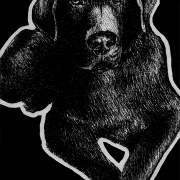 Labrador retriever, Labrador, lab, retriever, dog, dogs, pet, pets, lying down, front, frontal, relaxed, ink, inks, pen, pens, ballpoint pen, ballpoint pens, realism, realistic, animal, animals, wildlife, nature, achromatic, black and white, black, white, grey, gray, noelle, noelle brooks, noellebrooks, noelle m brooks, noellembrooks, art, series, drawing, drawings, picture, pictures, illustration, illustrations, portrait, portraits