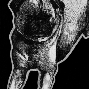 pug, pugs, dog, dogs, puppy, puppies, sleeping, lying down, fully body, full-body, domestic, pet, ink, inks, pen, pens, ballpoint pen, ballpoint pens, realism, realistic, animal, animals, wildlife, nature, achromatic, black and white, black, white, grey, gray, noelle, noelle brooks, noellebrooks, noelle m brooks, noellembrooks, art, series, drawing, drawings, picture, pictures, illustration, illustrations, portrait, portraits