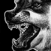 eurasian gray wolf, gray wolf, wolf, wolves, snarl, snarling, face, close-up, closeup, angry, mouth open, teeth, bark, barking, mad, fierce, violent, ink, inks, pen, pens, ballpoint pen, ballpoint pens, realism, realistic, animal, animals, wildlife, nature, achromatic, black and white, black, white, grey, gray, noelle, noelle brooks, noellebrooks, noelle m brooks, noellembrooks, art, series, drawing, drawings, picture, pictures, illustration, illustrations, portrait, portraits