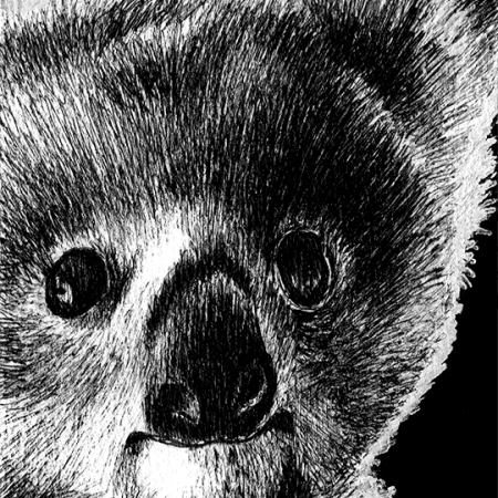 northern queensland koala, north queensland koala, queensland koala, koala, koalas, baby, face, front, frontal, close-up, close up, cute, ink, inks, pen, pens, ballpoint pen, ballpoint pens, realism, realistic, animal, animals, wildlife, nature, achromatic, black and white, black, white, grey, gray, noelle, noelle brooks, noellebrooks, noelle m brooks, noellembrooks, art, series, drawing, drawings, picture, pictures, illustration, illustrations, portrait, portraits
