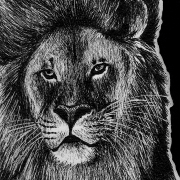 lion, lions, barbary lion, face, close-up, close up, messy mane, ink, inks, pen, pens, ballpoint pen, ballpoint pens, realism, realistic, animal, animals, wildlife, nature, achromatic, black and white, black, white, grey, gray, noelle, noelle brooks, noellebrooks, noelle m brooks, noellembrooks, art, series, drawing, drawings, picture, pictures, illustration, illustrations, portrait, portraits