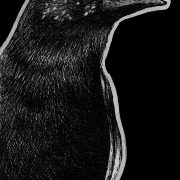 mariana crow, crow, crows, bird, birds, mouth open, beak open, side, profile, ink, inks, pen, pens, ballpoint pen, ballpoint pens, realism, realistic, animal, animals, wildlife, nature, achromatic, black and white, black, white, grey, gray, noelle, noelle brooks, noellebrooks, noelle m brooks, noellembrooks, art, series, drawing, drawings, picture, pictures, illustration, illustrations, portrait, portraits