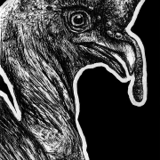 ocellated turkey, turkey, turkeys, bird, birds, ink, inks, pen, pens, ballpoint pen, ballpoint pens, profile, close-up, close up, headshot, face, realism, realistic, animal, animals, wildlife, nature, achromatic, black and white, black, white, grey, gray, noelle, noelle brooks, noellebrooks, noelle m brooks, noellembrooks, art, series, drawing, drawings, picture, pictures, illustration, illustrations, portrait, portraits