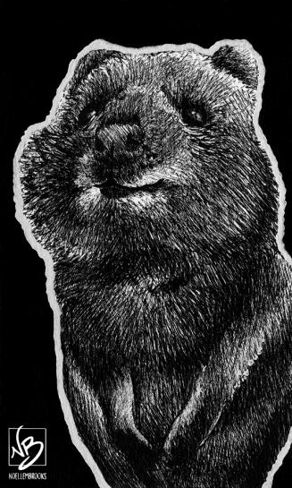quokka, quokkas, cute, standing up, full-body, full body, ink, inks, pen, pens, ballpoint pen, ballpoint pens, realism, realistic, animal, animals, wildlife, nature, achromatic, black and white, black, white, grey, gray, noelle, noelle brooks, noellebrooks, noelle m brooks, noellembrooks, art, series, drawing, drawings, picture, pictures, illustration, illustrations, portrait, portraits