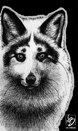 red fox, fox, foxes, marble fox, marbled fox, American fox, front, frontal, face, close-up, close up, ink, inks, pen, pens, ballpoint pen, ballpoint pens, realism, realistic, animal, animals, wildlife, nature, achromatic, black and white, black, white, grey, gray, noelle, noelle brooks, noellebrooks, noelle m brooks, noellembrooks, art, series, drawing, drawings, picture, pictures, illustration, illustrations, portrait, portraits