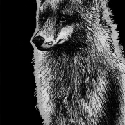 red fox, fox, foxes, sitting, tall, fluffy, side, profile, full-body, full body, ink, inks, pen, pens, ballpoint pen, ballpoint pens, realism, realistic, animal, animals, wildlife, nature, achromatic, black and white, black, white, grey, gray, noelle, noelle brooks, noellebrooks, noelle m brooks, noellembrooks, art, series, drawing, drawings, picture, pictures, illustration, illustrations, portrait, portraits
