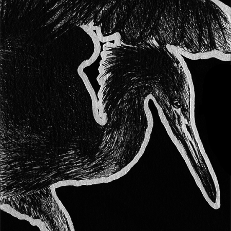 reddish egret, red egret, egret, bird, wing, wings, looking down, looking downward, standing, ink, inks, pen, pens, ballpoint pen, ballpoint pens, realism, realistic, animal, animals, wildlife, nature, achromatic, black and white, black, white, grey, gray, noelle, noelle brooks, noellebrooks, noelle m brooks, noellembrooks, art, series, drawing, drawings, picture, pictures, illustration, illustrations, portrait, portraits