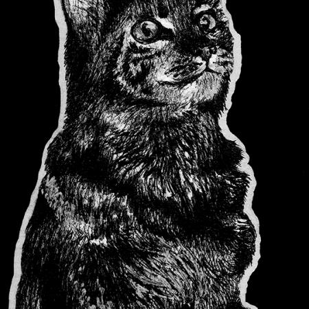cat, cats, kitty, kitties, kittycat, kitty cat, kitty-cat, pet, pets, sitting, full body, full-body, looking up, cute, ink, inks, pen, pens, ballpoint pen, ballpoint pens, realism, realistic, animal, animals, wildlife, nature, achromatic, black and white, black, white, grey, gray, noelle, noelle brooks, noellebrooks, noelle m brooks, noellembrooks, art, series, drawing, drawings, picture, pictures, illustration, illustrations, portrait, portraits