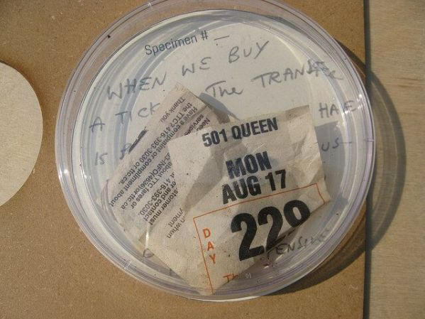 Fig. 2 Transitions in Progress. Collected specimen. Parkdale, Sept. 2 2015