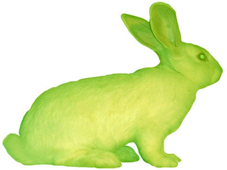 Fig. 1 – GFP Bunny (Alba), transgenic rabbit, 2000 (Photograph by Crystelle Fontaine)