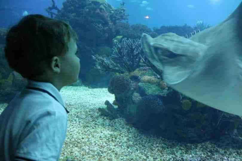 Ryba dla dziecka