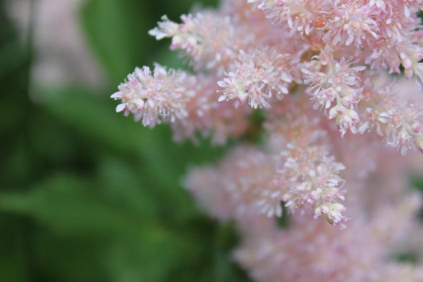 31. petals #sixtysummersights ||noexcusescrapbooking.com