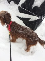 Maddie loves the snow.
