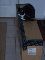 MiMi knows that the Christmas tree is in that box. 5th by interest.