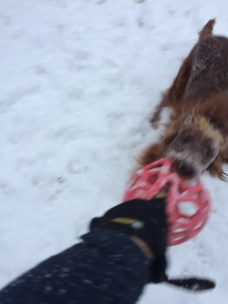 This ball is fun in the snow, but lots of places for Maddie to hold on.