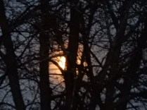 That's the moon. Really, it's there, behind that tree :(