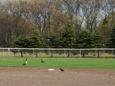 """""""You sure this is the right field?"""" Right field? I'm playing short stop."""""""