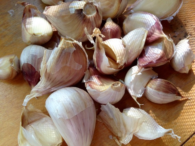 garlic_NoFarmNeeded