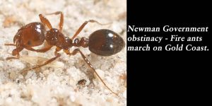 Newman Governmen obstinacy - Fire ants march on Gold Coast