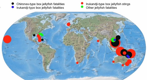 Map of global marine stinger fatalities by L Gershwin from Youtube
