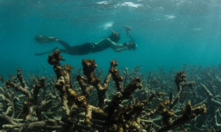 Coral bleaching: #GreatBarrierReef cooking in a marine heatwave while Turnbull dithers on climate – reports @takvera