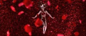 Image result for american beauty roses