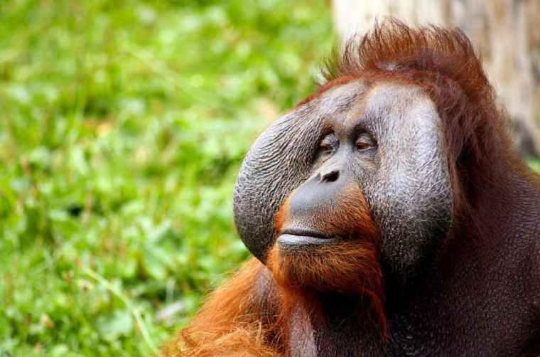 Wildlife – Orangutans, Elephants, Tigers and Snorkelling.