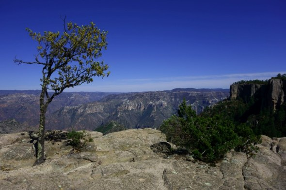 Copper Canyon (17)