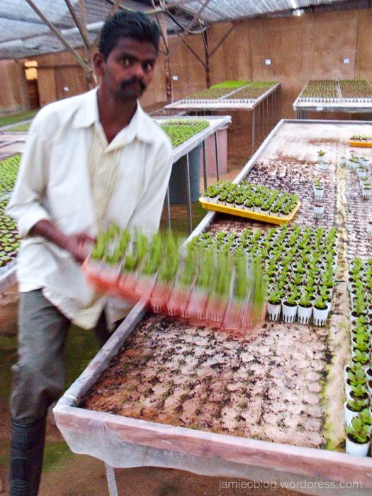 worker, plantation, green, baby plants