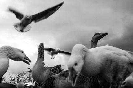 Melbourne, great ocean road, birds