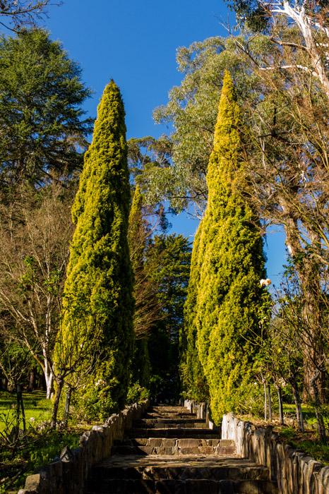 Melbourne, Maroondah Reservoir Park, Trees