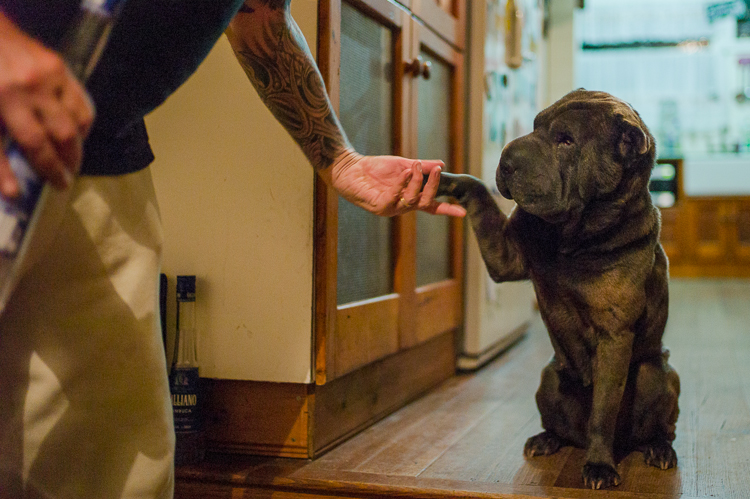 Jamie Chan, Leica, Travel Blog, Melbourne, Sharpei, dog