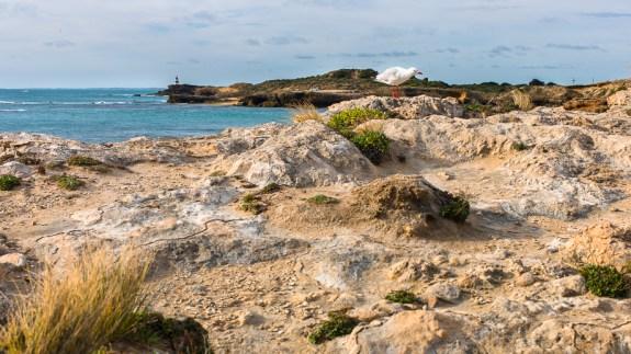 landscape, australia, leica, Jamie Chan, No Foreign Lands, Photographer, Bird, robe, seaside