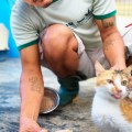 Youth Shooting Home, Jamie Chan, The story behind, Animal Shelter, Cat, Feeding