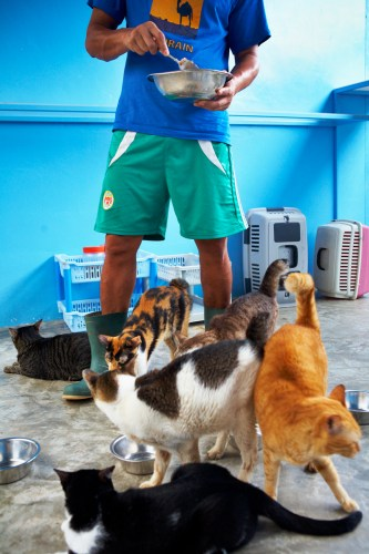 Youth Shooting Home, Jamie Chan, The story behind, Animal Shelter, Cats