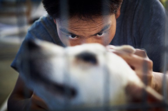 Youth Shooting Home, Jamie Chan, The story behind, Animal Shelter, dog, cleaning