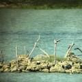 No Foreign Lands, kenting, Jamie Chan, travel, Leica, birds, long luan lake nature centre, birds