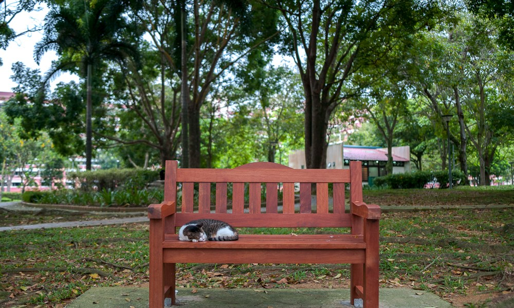 No Foreign Lands, Spaces, Jamie Chan, Photography, punggol Park