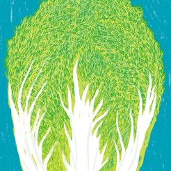 仙台白菜イラストレーション