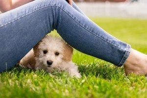 puppy, dog, mammal-5124948.jpg