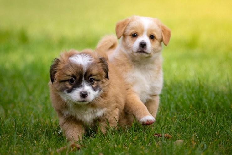 animal, domestic animal, dog-1134504.jpg