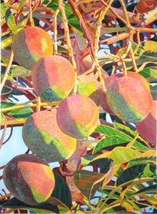 Morning Mangoes 30 x 22
