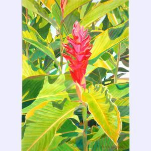 Torch Ginger, Fabienne Blanc, 20 x 14
